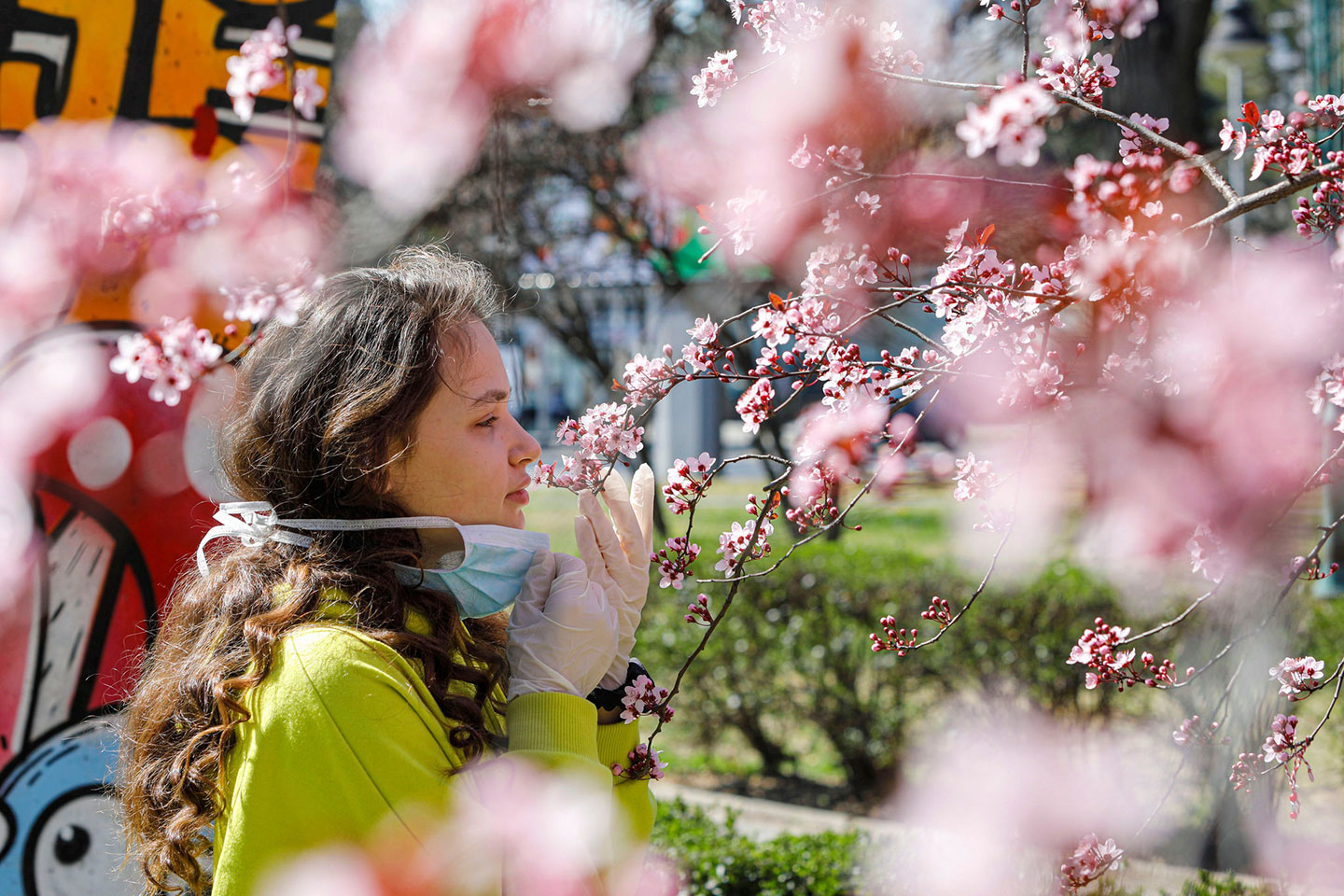 Image from the NYTimes article: A girl removed her mask to smell the flowers on a blooming tree in Skopje, North Macedonia, on Friday. Evidence is growing that lost sense of smell and taste are peculiar telltale signs of Covid-19, the disease caused by the coronavirus.Credit...Ognen Teofilovski/Reuters