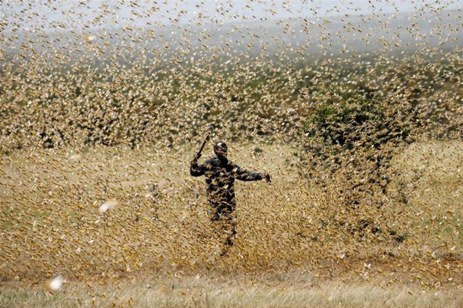 The Food and Agriculture Organization of the United Nations has secured about $111m of funding towards fighting the locust swarms [Baz Ratner/Reuters]