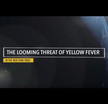The looming threat of yellow fever