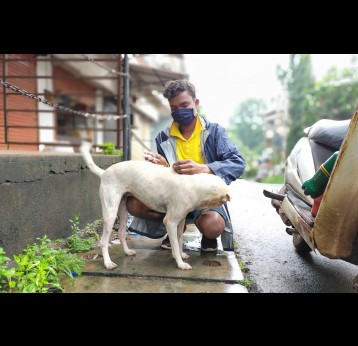 "India's population of ""strays"" - and Mission Rabies's target population - includes well-loved community dogs, not quite pets, but more half-owned than un-owned. Credit: Mission Rabies"